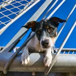 dog posing in the travel on a walkway at sea